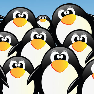 a picture of penguins to illustrate our guide to the guide to google penguin update